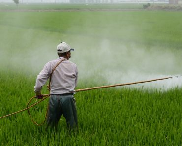 What are the pesticide formulations?